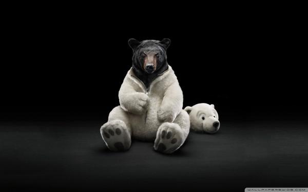 bear-wallpaper-1920x1200-e1411473296504